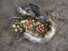 cosmetic plastic packaging sea pollution - Google Search