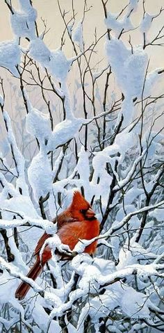 Art Country Canada - John Seerey-Lester - The World's largest online collection of Limited Edtion paper and Giclee on Canvas Pretty Birds, Love Birds, Beautiful Birds, Animals Beautiful, Winter Pictures, Bird Pictures, Animal Pictures, Hirsch Illustration, I Love Winter