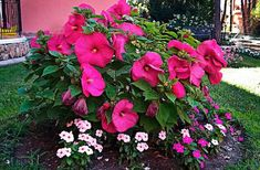 26 Flowers That Bloom All Year Round | Permanent Flowering Plants Rare Flowers, Amazing Flowers, Yellow Flowers, Bonsai Garden, Garden Plants, Flowers Perennials, Planting Flowers, Year Round Flowers, Pool Landscaping Plants