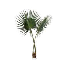 John-Richard Delta Palmettos Botanical ($633) ❤ liked on Polyvore featuring home, home decor, floral decor, southern home decor, john-richard and floral home decor