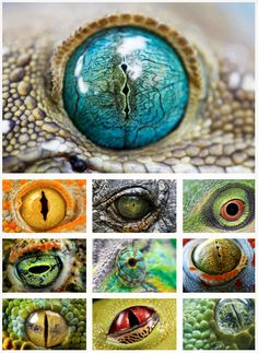 Beautiful eyes of amphibians and reptiles.
