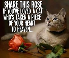Share this Rose if you've ever loved a Cat who's taken a piece of your heart to Heaven.