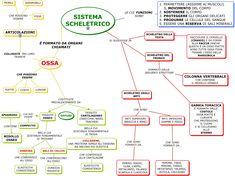 MAPPA TESSUTO OSSEO 2 media - Cerca con Google