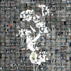 "Saatchi Art Artist Il Jung; Photography, ""'Coexistence'_Bupleurum latissimum - Limited Edition #2 of 5"" #art"