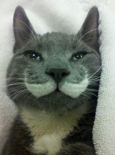 Cat with Moustache in His Fur