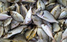 Η γεύση των ψαριών & γιατί κάποια ψάρια είναι πιο νόστιμα. Πώς ομοειδή ψάρια διαφέρουν γευστικά όντας νοστιμότερα από ίδια άλλα. Fish And Seafood, Meat