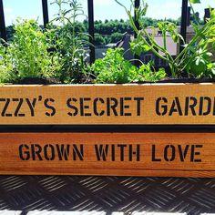 "lizzy_cummins on Instagram: ""Did some more ""gardening"" today! #greenfingers #balconygarden #apartmentliving #lizzyssecretgarden #grownwithlove #herbs #herbgarden #basil…"""