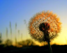 What I need is the dandelion in the spring. The bright yellow that ...