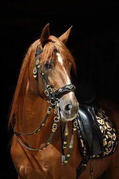 Beautiful horse, beautiful tack.