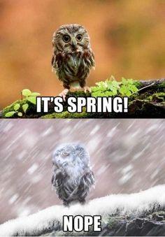 Funniest Memes - [It's Spring. Nope.] - FunniestMemes.com