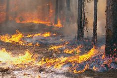 Use these fast-acting tips to evade or escape a dangerous forest fire.