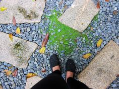Old stone steps in my garden :)