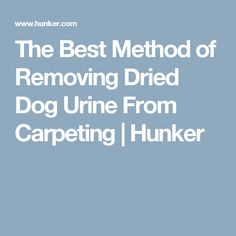 The Best Method of Removing Dried Dog Urine From Carpeting | Hunker