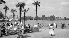 Lüden fotografierte auch die Palmen, die in den 50er-Jahren dem Jungfernstieg mediterranes Flair verliehen