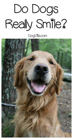 Do dogs smile? Oddly, that's a fairly controversial question! Find out if Fido really is grinning at you or if something else is going on when he smiles!
