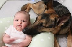 German Shepherd #Dog Shares Bed with Baby