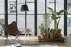 La chaise papillon, icône de la modernité