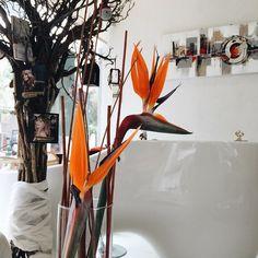 Ήρθε το #pouli του #paradisou μπας και μας πει κανα τραγούδι #flowers #orange #icehairlab#fiorelino #🌷#✂️#💇##⃣ Instagram