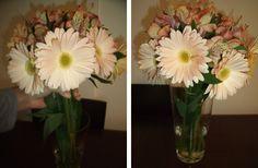Tutorial | Arranjo floral com gérberas