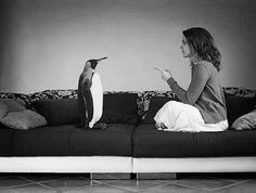 Let's get one thing straight, penguin!