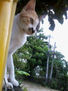 cat guard on post :)