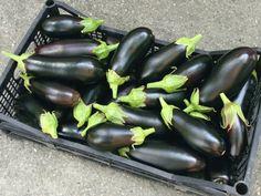 Come coltivare le melanzane in vaso o nell'orto, un ortaggio molto versatile in cucina Vegetable Garden, Eggplant, Vegetables, Hobby, Cocktail, Gardening, Garden, Feltro, Calendar