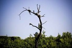 "giuseppe penone arbre"""