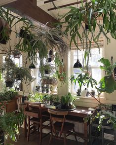 Damn the airplants Green Plants, Air Plants, Indoor Plants, Plant Aesthetic, Aesthetic Room Decor, Interior Garden, Interior And Exterior, Inside Garden, Room With Plants