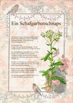 Precious Tips for Outdoor Gardens - Modern Healing Herbs, Medicinal Herbs, Diy Projects For Beginners, Schnapps, Real Plants, Plant Illustration, Wild Nature, Beauty Recipe, Fantastic Art