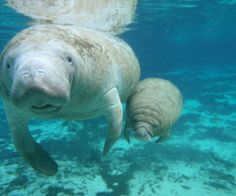 I love these sea cows