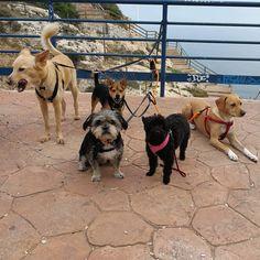 Paseo con Penny, Richie, George, Keka y Monty 11/17