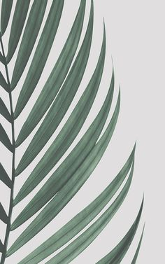 Create a cool minimalist style that's bang on trend with this fresh tropical palm leaves wallpaper, a contemporary mural. Palm Wallpaper, Feature Wallpaper, Tropical Wallpaper, Green Wallpaper, Iphone Background Wallpaper, Retro Wallpaper, Aesthetic Iphone Wallpaper, Aesthetic Wallpapers, Wallpaper Plants
