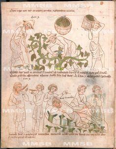 XXIII.C.124, Národní knihovna České republiky