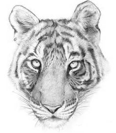 tiger drawings Tiger Drawing, House Front Design, Animal Drawings, Watercolor, Cartoon, Eid, Animals, Colors, Pen And Wash