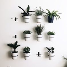 Wall Planter Hook + Reviews | Crate and Barrel