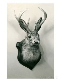 """Can't bring myself to put a """"real"""" one in my house, so this might be a good compromise :) (Stuffed Jackalope Posters at AllPosters.com)"""