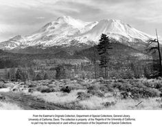 Mt. Shasta B-1996 - Taken 1946 - Pretty much what it looks like today out near Lake Shastina