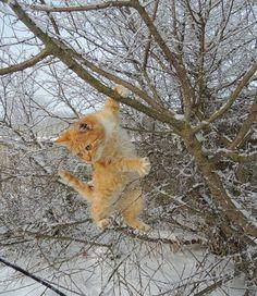 Determined winter kitten