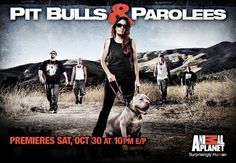 pitbull and parolees adoptable dogs | Dog Supplements | Dog Muscle Builder | Pit Bulls: Pit Boss Shortywood ...