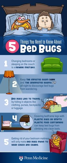 bed bugs are making a come back today and are found in bedrooms