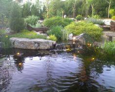 backyard ponds | Backyard pond | St. Louis Wild Ones