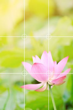 Composing a Photo: Understanding the Rule of Thirds - Better Photography Rule Of Thirds Photography, Photography Rules, Better Photography, Camera Photography, Amazing Photography, Nature Photography, Rule Of Three, Video Studio, Photo Composition