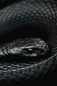 A Slytherin snake Les Reptiles, Reptiles And Amphibians, Beautiful Creatures, Animals Beautiful, Regulus Black, Beautiful Snakes, Pretty Snakes, Slytherin Aesthetic, Hogwarts Houses
