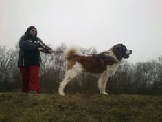 Moscow watchdog 21.months