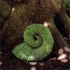 Andy Goldsworthy: alles Natuur : gemaakt van bladeren, samengehouden door doornen