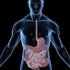 Discovering that 95% of the body's serotonin is in the gut and affected by our digestion may make people rethink what they consume and how it affects well being!  Very interesting article!