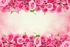 border of Beautiful fresh sweet pink rose for love romantic valentine background This purchase includes : - One High resolution digital image at 350 dpi - sRGB Ribbon Png, Love Backgrounds, Romantic Backgrounds, Beautiful Flowers Wallpapers, Valentines Day Background, Borders For Paper, Valentine Day Crafts, Valentine Special, Valentine's Day Diy