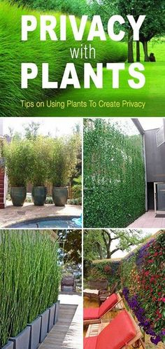 Privacy with Plants!  Tips and ideas on how to use plants to create privacy in your garden or yard!  http://www.thegardenglove.com/privacy-with-plants/  https://www.facebook.com/PreppingMeansPrepared/