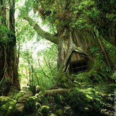 I think a hobbit could live here...and me too.