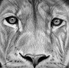 Dibujo de león terminado / Drawing of lion finished